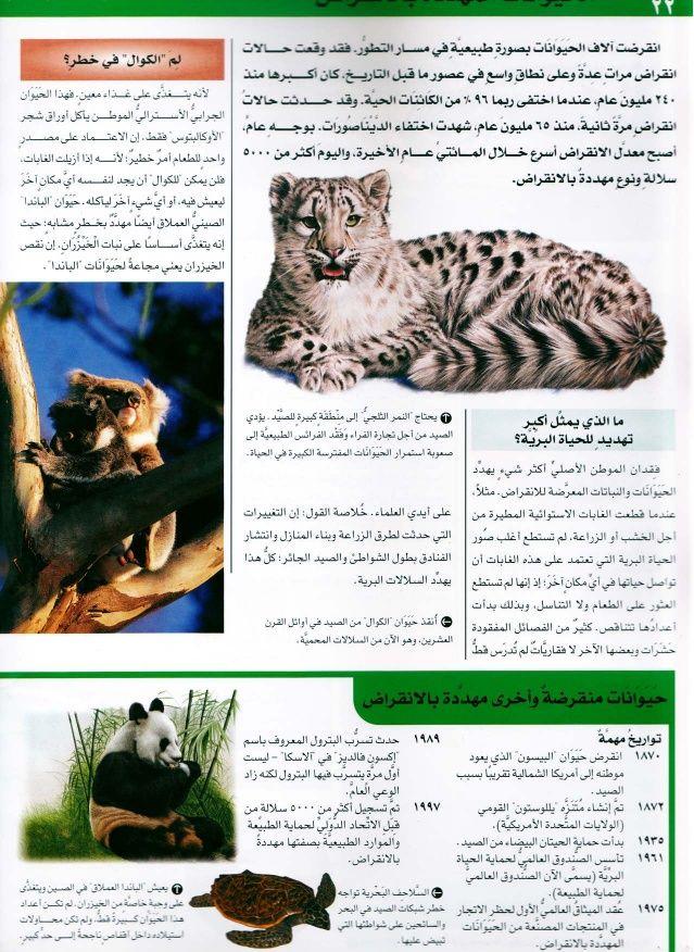 موسوعة سؤال وجواب عالم الطبيعة Cats Animals Art