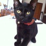 Luiz è un dolce gattino nero di 3 mesi