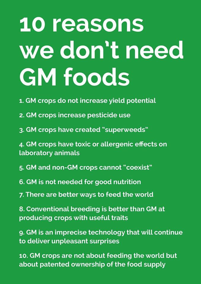 summary on gm food A quick gmo summary check out the huffington post for a great, short summary of what you should know about genetically modified organisms (gmos) i'm quoting the key points below, but read the full article for the explanations, details, and supporting facts.