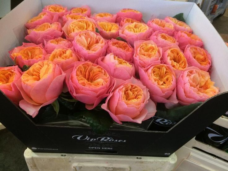 rose and lavender flower scent essay 2016-12-13 smell smelling, aroma, scents, fragrances, odors, taste quotations, sayings, aphorisms, clichés, quips, quotes, wisdom, poetry, facts, comments.