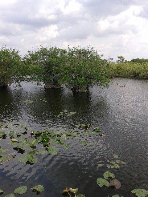 Florida - parc everglades