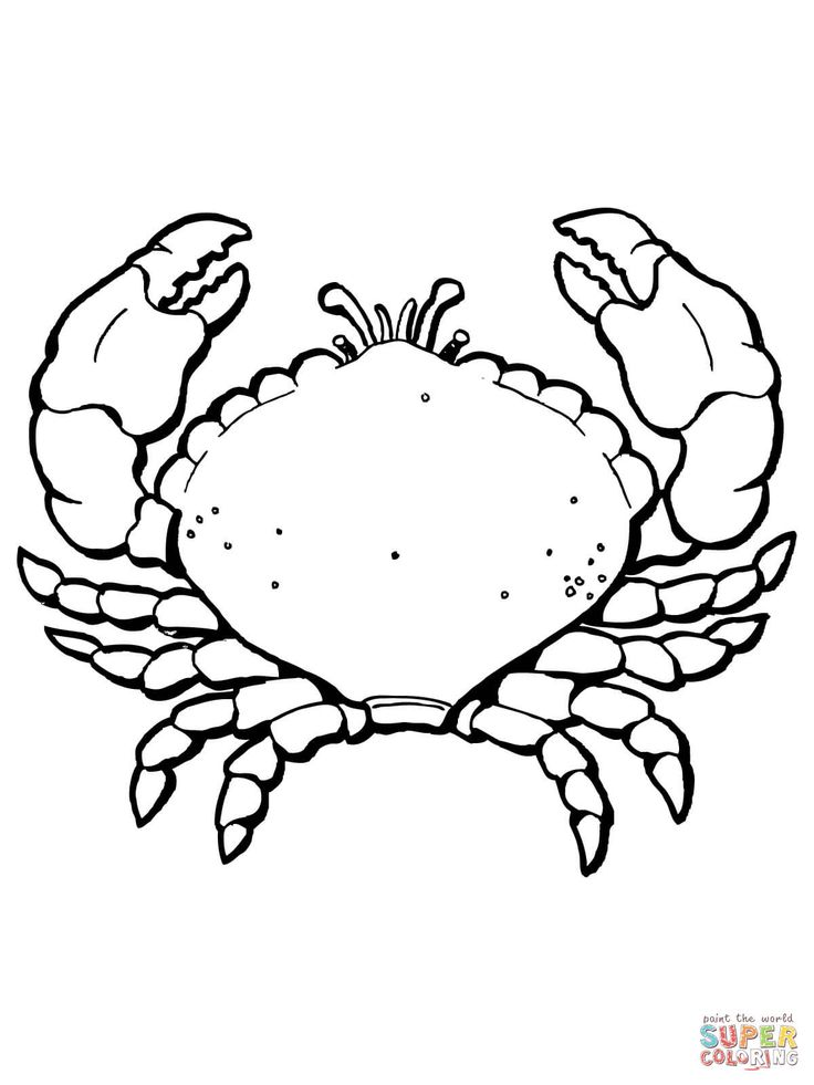 coloring crab with big claws coloring page free printable
