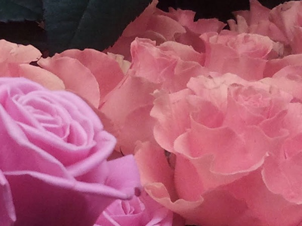 Kukkakaupasta bongattua