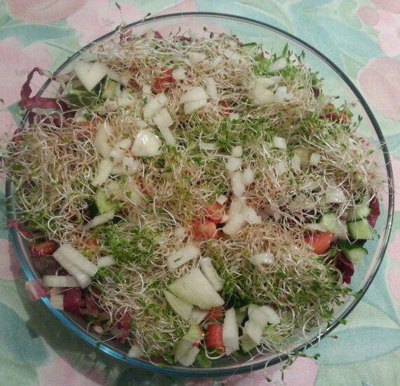 Salada do broto Alface mimosa radichio pepino tomate cebola broto de alfafa. Molho...sal azeite oleo de semente de abóbora aceto balsamico