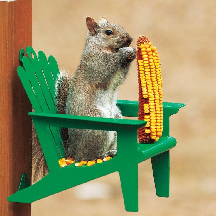 Adirondack Chair Squirrel Feeder: Enjoy hours of fun watching squirrels eat corn on the cob! Get it HERE: http://www.thegiftsformen.com/adirondack-chair-squirrel-feeder.php
