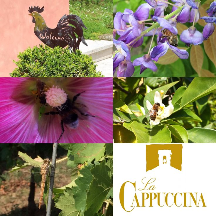 That's  Biodivesity at La Cappuccina