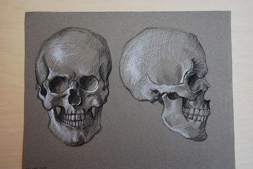 Easy Skull Drawings | Anatomy Drawings: the skull and its muscles | Elizabeth Floyd