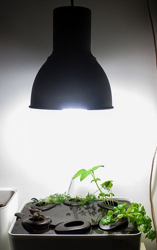 (Day 38) Some new growth. Installed Ikea lamp with 45W esl.