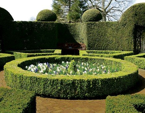 22 best Hedges images on Pinterest Hedges Gardens and Landscaping