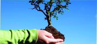 desarrollo sustentable