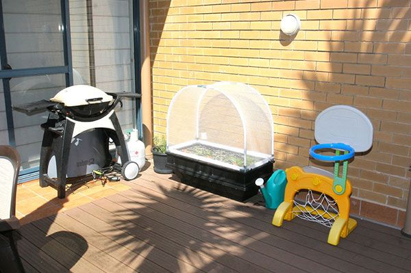 Ideal for any area - small courtyard