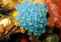 Koh Lipe Coral http://www.phiphi-ferry.com/