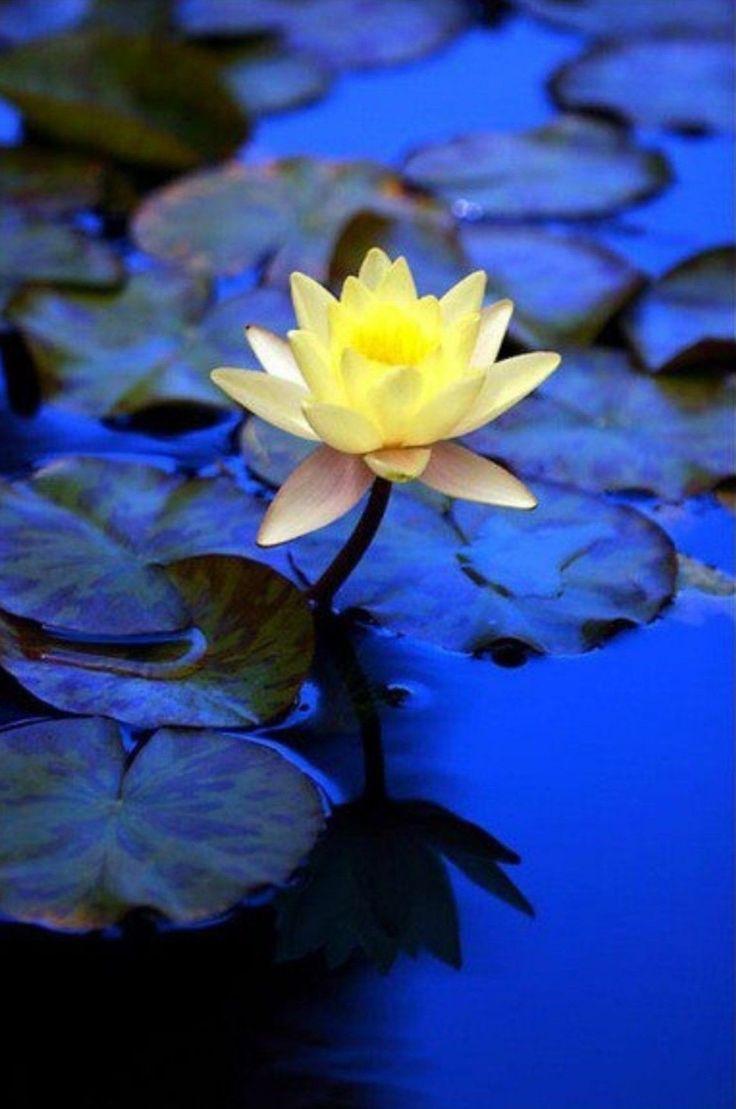 best Flower Power images on Pinterest Flowers garden Beautiful