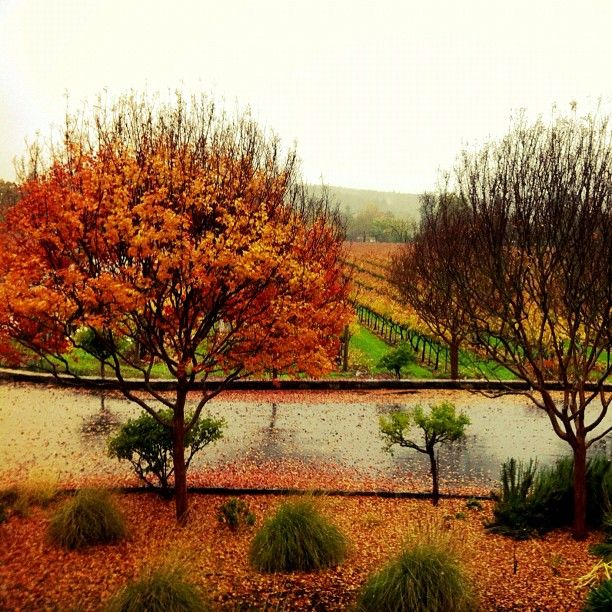 @Deb Mayhew Vineyards in the fall, Sonoma Valley