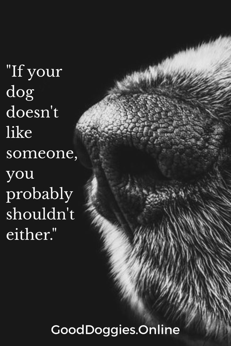 Is your dog a good judge of character? Read to see if dogs can sense bad people or if they can perceive things their owners can't. #GoodDoggies