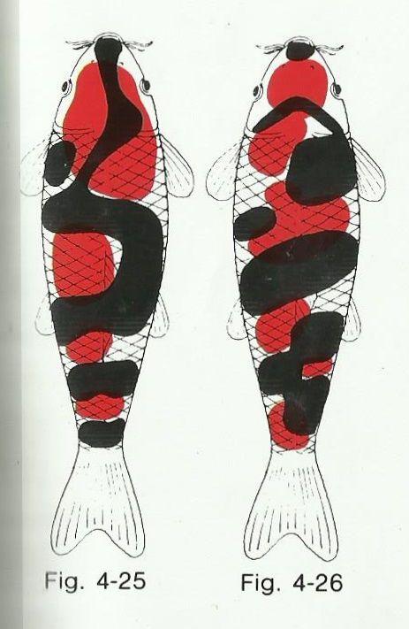showa koi fish diagram #showakoifish