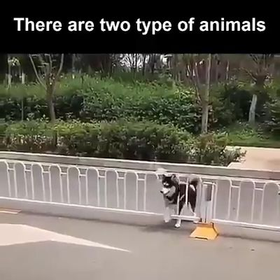 Two type of animal: Amazing and MORE Amazing  – Cuties