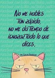 Imagen relacionada - Tap the link now to see all of our cool cat collections!