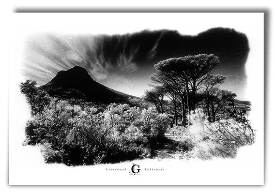 Lions head 9640 cape town south africa edition 250 prints print on canvas fine