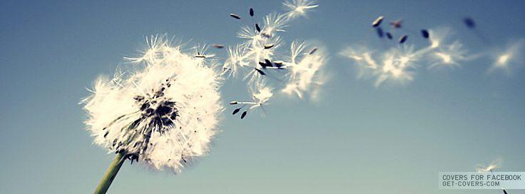 Dandelion - Facebook Covers | Facebook Profile Covers