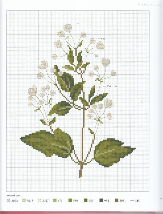 Gallery.ru / Фото #101 - Herbier - Mosca