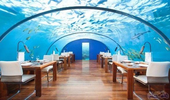 """مطعم زجاجي مذهل في جزر رانغالي يجذب…: يقع مطعم """"Ithaa"""" في منتجع كونراد """"Conrad Maldives"""" في جزر رانغالي، وهو مطعم مذهل تحت سطح البحر بحوالي…"""