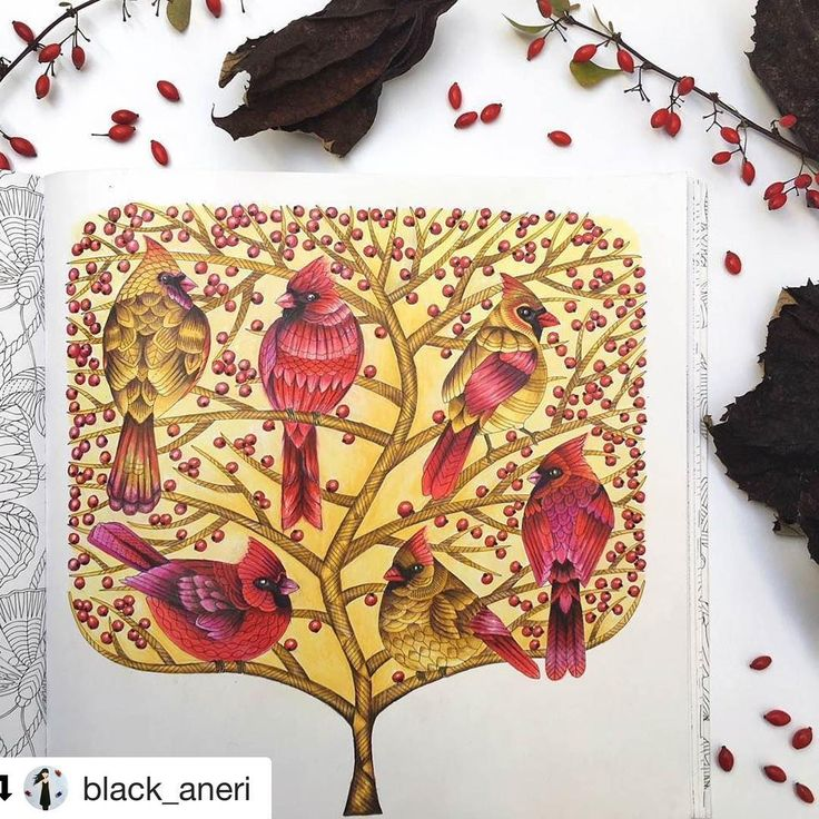 #Repost @black_aneri (@get_repost) ・・・ I'm busy finishing all of my WIP pages these days. I don't know how you guys get used to this but 4 of mine trouble me  I guess I feel much better when I pick one project and stick to it but there were just too many beautiful colouring books lately and I had to start something in all of them  Lovely colouring book #beautifulbirdsandtreetoptreasures by #MillieMarotta ❤ #coloringbooks #colouringbookforadults #adultcoloring #adultcolouring #coloredpenci...