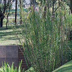 Sol - Se o seu jardim recebe muita luz direta, escolha plantas de pleno sol, como beri, petúnia, alpínia (foto), camarão-amarelo, capim-do-texas, moreia, murta, hortênsia, azaleia, hibisco, fórmio, gardênia, suculentas, cactos, agapanto, clúsia, estrelítzia e camélia. Projeto de Gilberto Elkis.