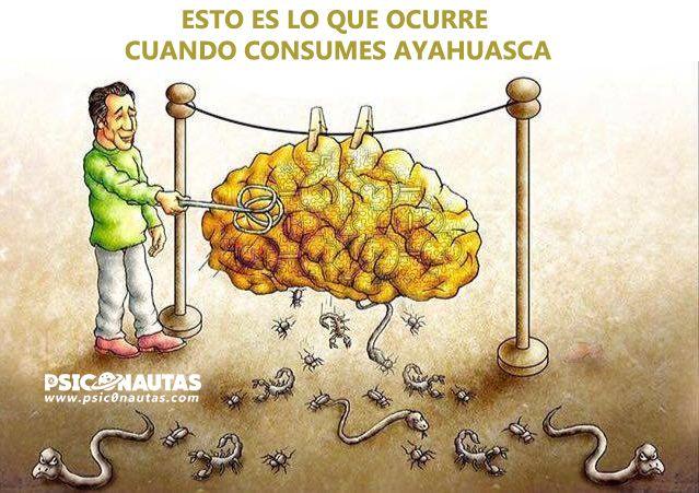 Esto es lo que ocurre cuando consumes ayahuasca