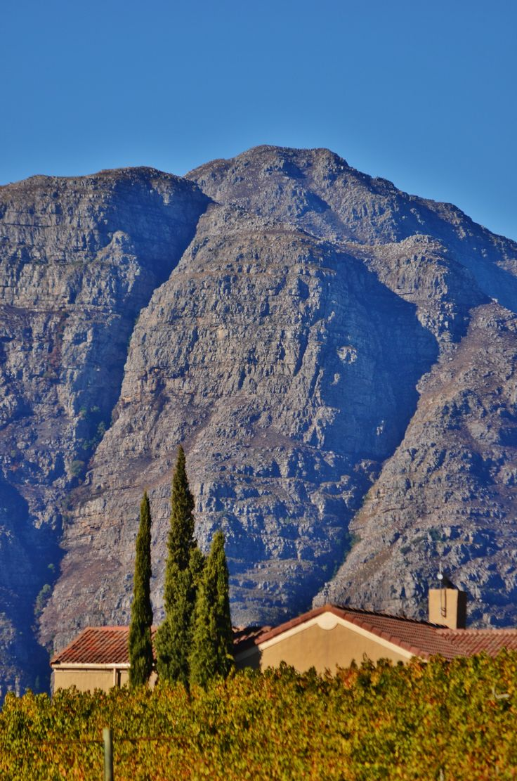 Uva Mira wine estate against the slopes of the Helderberg mountain - between Somerset West and Stellenbosch - South Africa. #uvamira #wineestate #capewinelands #somersetwest #stellenbosch
