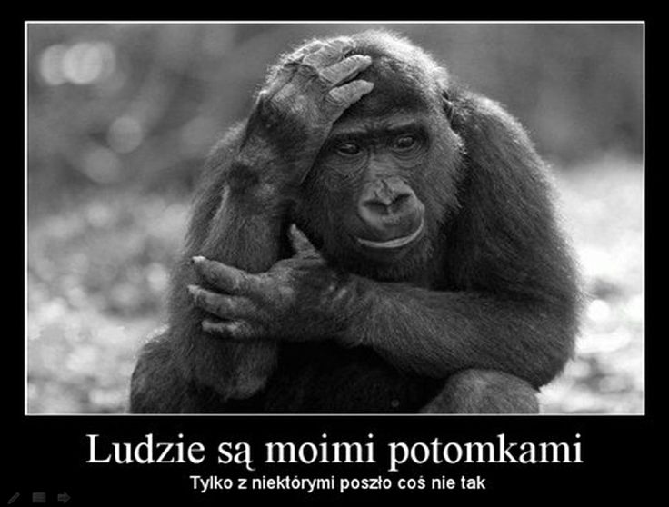 Małpie rozczarowanie