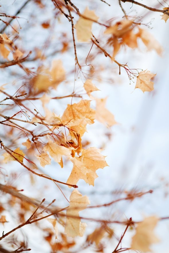 .Autumn leaves