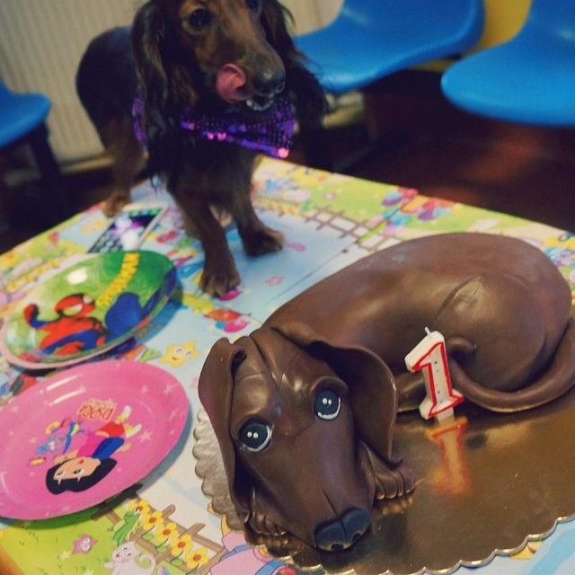 Pierwsze urodziny piesi! Cały tort czekoladowy dla niej za te wszystkie lajki które mi zbiera. #party #bungabunga #happydog by jasonhunt.pl