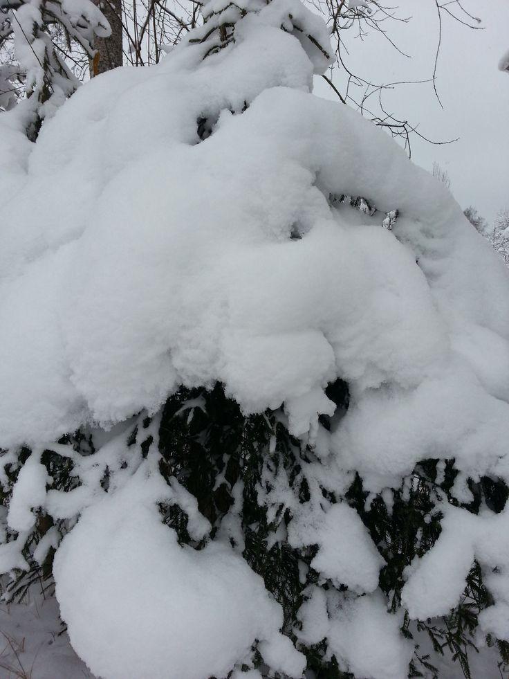 Зима)