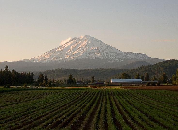 Mt. Adams from near Trout Lake, WA - amazing, isn't it?