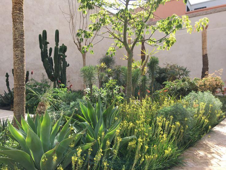 494 best plantas especies combinaciones y usos images on for Buy secret jardin