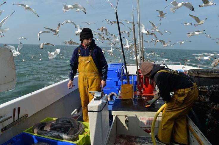 FIGARO DEMAIN - La plateforme vend, en direct sur Internet, des casiers surprises de poissons pêchés 48 heures maximum auparavant par de petites embarcations.