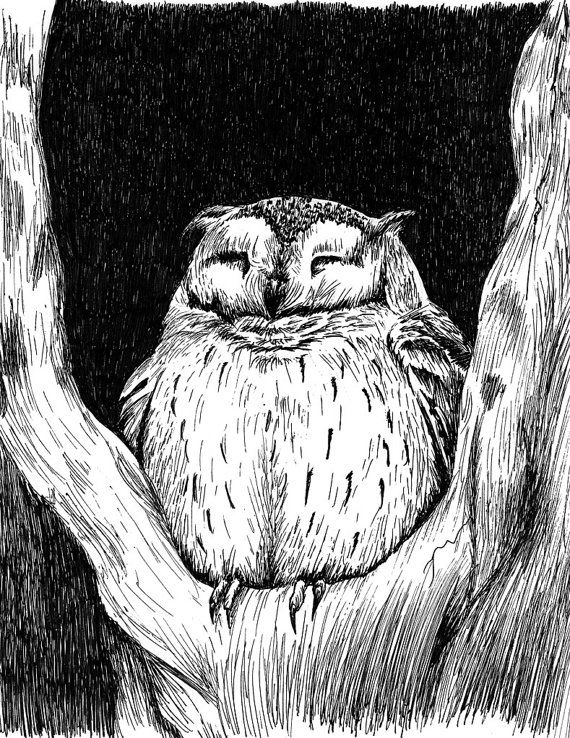Cozy little scops owl black and white pen and ink print