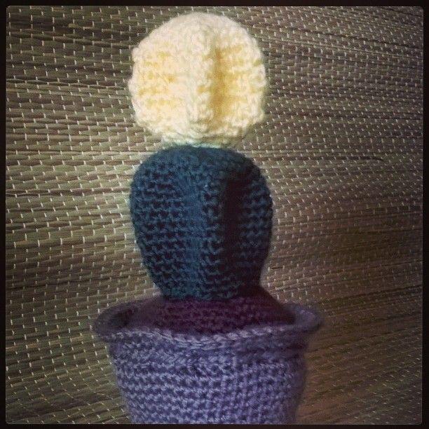 Ecco la #piantagrassaconinnesto che ho scelto per il #vaso... Buonanotte a tutti #creazioni #uncinetto #crochet #amigurumi #piantagrassa #cactus