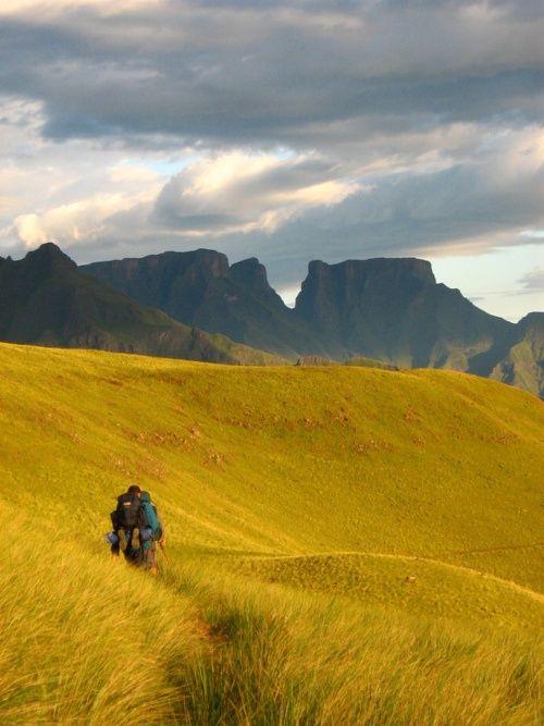 Saffron grasslands - Drakensberg Mountain, South Africa