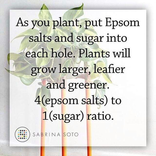 Tips for your plants