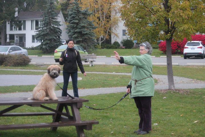 Dog Agility Training Oakville