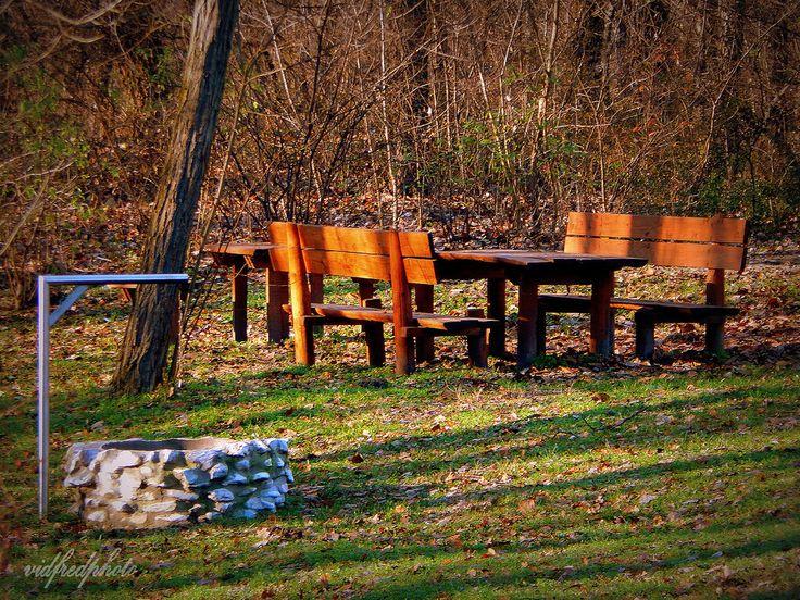 https://flic.kr/p/BxkAiR | Tököli Parkerdő | Erdészház előtti tisztás