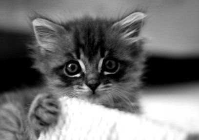 Use Kittens as placeholder images, #kittens all around, make your page look better. I swear.