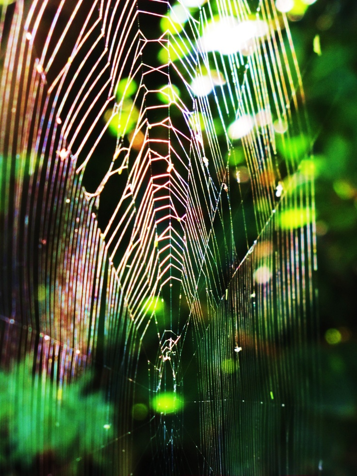 how to build a spider web
