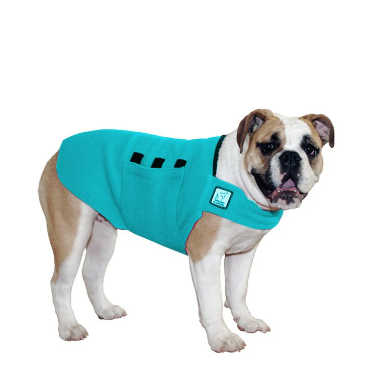 Turquoise English Bulldog Dog Tummy Warmer, great for warmth, anxiety and laying with our dog rain coat. High performance material. Made in the USA.