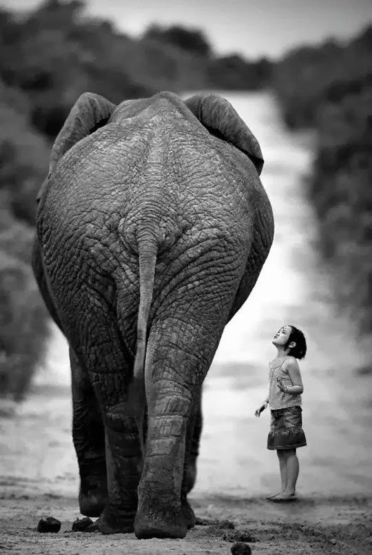 Young girl and elephant…but  Mr. Elephant tell me why are you so tall and strong??!!