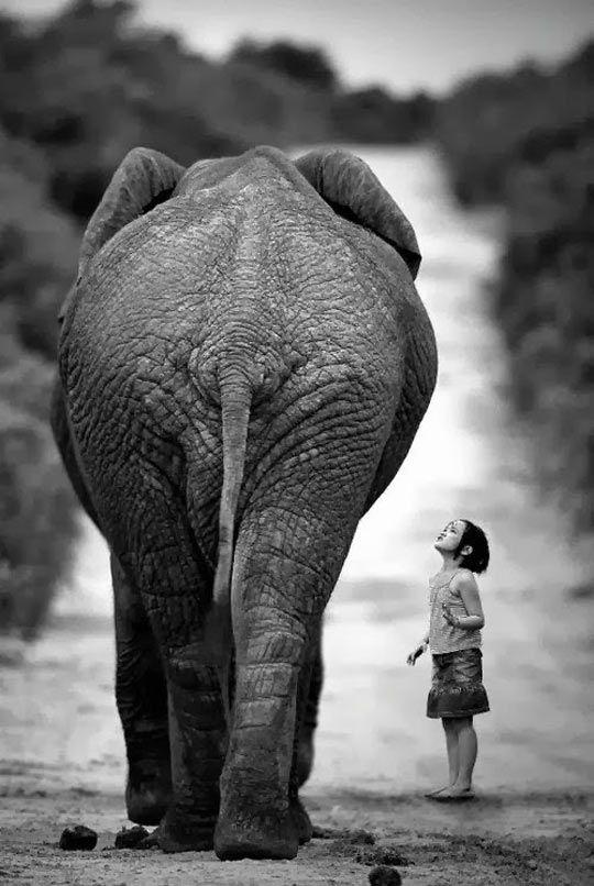 M s de 25 ideas fant sticas sobre elefantes en pinterest - Fotos de elefantes bebes ...