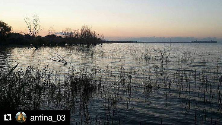 #Repost @antina_03  #tramonto#autunno#autumn#lake#lagotrasimeno#altrasimeno#trasimenolake#trasimeno_lake#postotranquillo#postispeciali#senzaparole#darsena#acqua#water#nofilter#senzafiltri#pacedeisensi#unpodipaceperme#occhicheringraziano#speranza#paesaggio#igerumbria#instagram#instalike#picoftheday