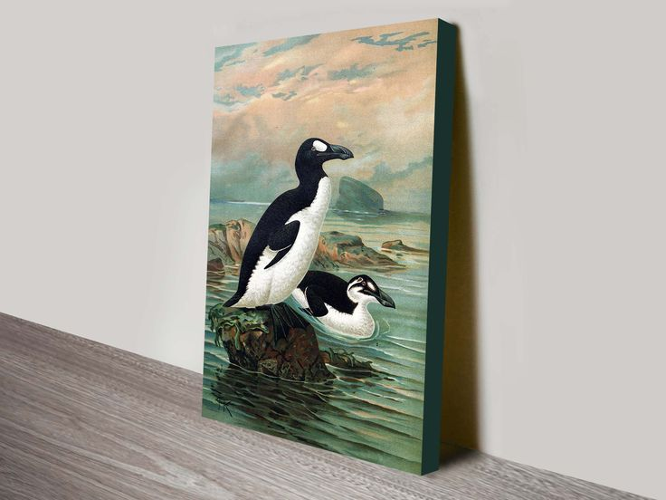 This is a beautiful reproduction print of an 1890s color lithograph of a Great Auk (now extinct) illustrated by John Gerrard Keulemans.